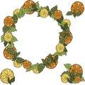Fresh Citrus wreath on white background