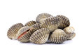Fresh clam shellfish food on white background a Stock Photo