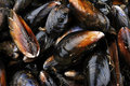 Fresh and closed organic mussel Royalty Free Stock Photography