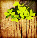 Fresh clover leaves over wooden background Royalty Free Stock Photo