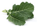 Fresh collard greens on a white background Stock Images