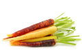 Fresh colorful mix of red orange and yellow carrots with some foliage on a white background Royalty Free Stock Photo