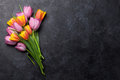 Fresh colorful tulip flowers Royalty Free Stock Photo