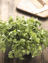 Fresh coriander leaves Stock Photography