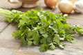 Fresh coriander on the table Stock Images