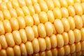 Fresh corn. Royalty Free Stock Photo