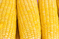 Fresh corn background Stock Images