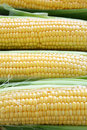 Fresh corn closeup top view food Royalty Free Stock Photography
