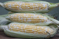Fresh Corn on the Cob Royalty Free Stock Images