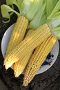 Fresh corn on cobs Royalty Free Stock Photo