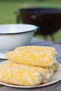 Fresh corns on white plate Royalty Free Stock Photos