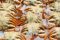 Fresh crabs in the market chilled Stock Image