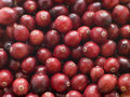 Fresh Cranberries Royalty Free Stock Photography