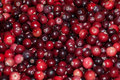 Fresh cranberry wallpaper Royalty Free Stock Photo