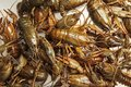 Fresh crawfish background, crayfish seafood lunch, gourmet dish Royalty Free Stock Photo