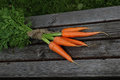 Fresh crop of carrots tie beam Royalty Free Stock Photo