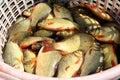 Fresh crucian  fish on a shop counter. Crucian Stock Images