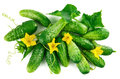 Fresh cucumber top view green leaves flowers Royalty Free Stock Photo