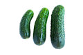 Fresh cucumbers Royalty Free Stock Photos