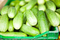 Fresh cucumbers closeup of green on sale at produce market Royalty Free Stock Photo