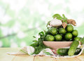 Fresh cucumbers prepared for preservation on the Royalty Free Stock Photo