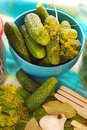 Fresh cucumbers  for preparing pickles Royalty Free Stock Photo