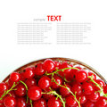Fresh currants Stock Images