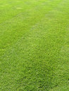 Fresh Cut Lawn Grass 6 Stock Photo