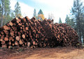 Fresh Cut Logs Stock Photos