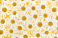 Fresh daisies over yellow background Stock Photos