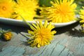 Fresh dandelion flowers for healthy salad Stock Image