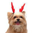 Fresh dog with cute antler mixed breed christmas in white background clipping path Stock Photo