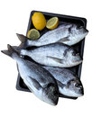 Fresh dorada fish isoleted with clippig path Royalty Free Stock Photography