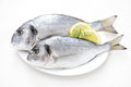 Fresh dorada Royalty Free Stock Photo