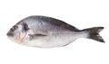 Fresh dorado fish isolated on white Royalty Free Stock Photo