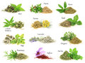 Fresh and dry aromatic herbs Royalty Free Stock Photo