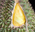 Fresh durian is open the rind in thai market Royalty Free Stock Photography