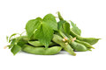 Fresh edamame Royalty Free Stock Photo