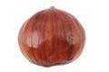 fresh edible chestnut
