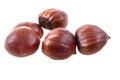 fresh edible chestnuts
