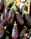 Fresh eggplant a close up view of some big portrait cut Royalty Free Stock Photos