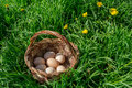 Fresh eggs a basket of on grass Stock Photo