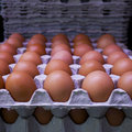 Fresh eggs on cardboard trays Stock Image