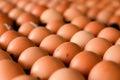 Fresh eggs from farm in carton Royalty Free Stock Photo