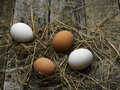 Fresh eggs farm egg on hay top view Royalty Free Stock Photography