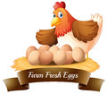 Fresh eggs from the farm illustration of on a white background Stock Photos