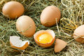 Fresh eggs in grass Stock Images