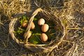 Fresh eggs on moss and straw Royalty Free Stock Photography