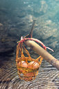 Fresh eggs in one basket soak in the hot springs thailand Stock Image