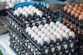 Fresh eggs stall in the fresh Market. Royalty Free Stock Photo